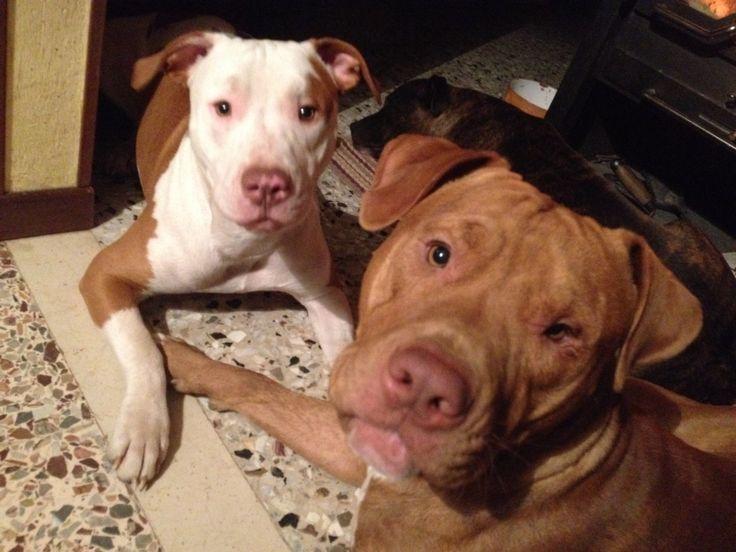 Maya & Drax