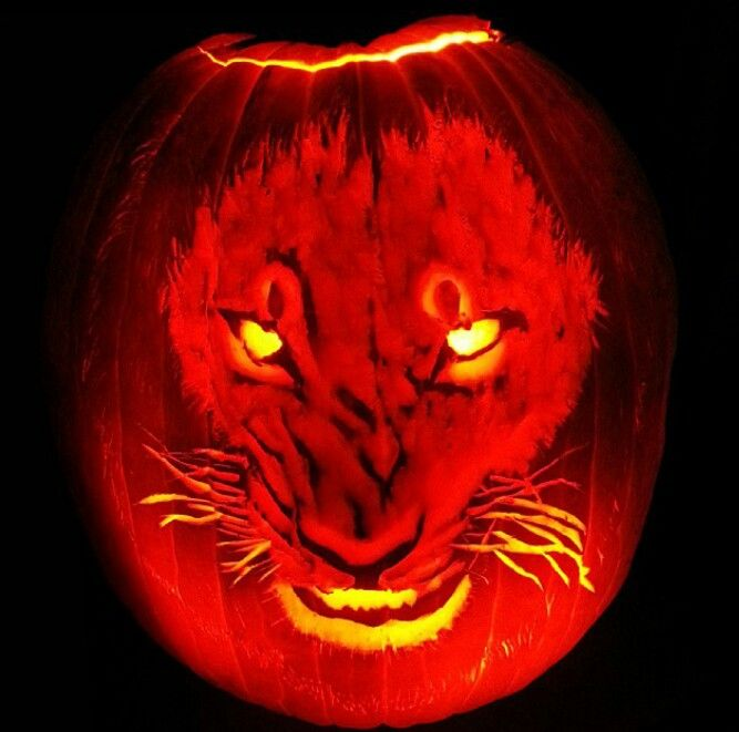 Halloween decorated pumpkin carved lion tiger panther
