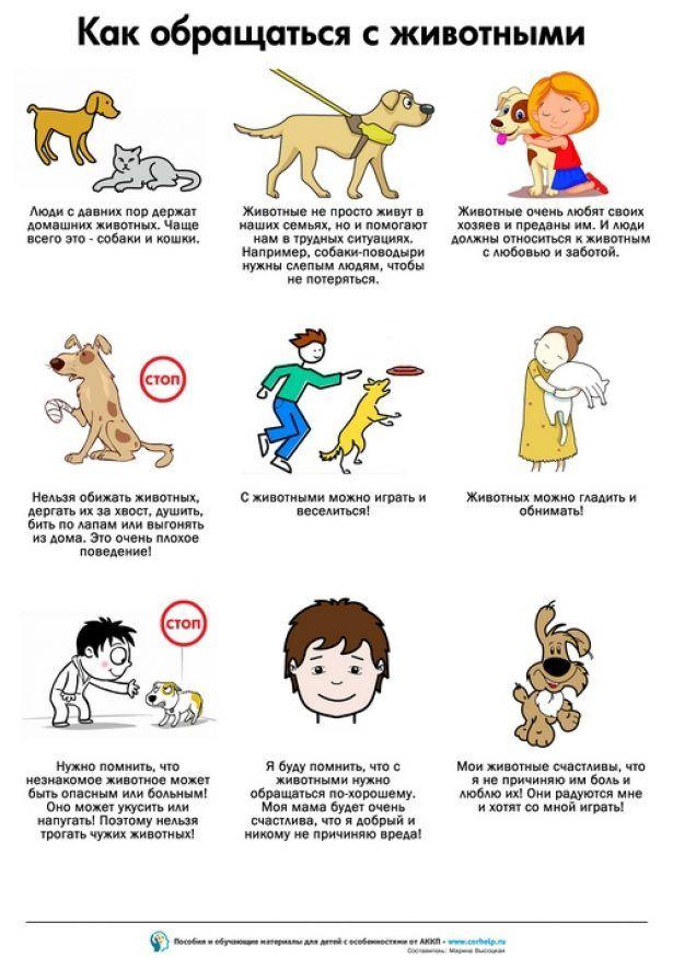 Как обращаться с животными