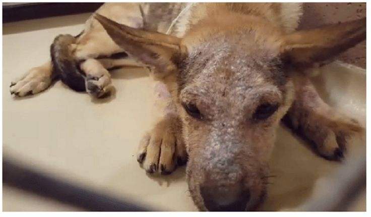 At the high kill Harris County Animal Shelter (HCAS) in Houston, Texas, a 4 month old puppy is fighting for his freedom. According to an anonymous shelter staff member, his heartless owner surrendered him because