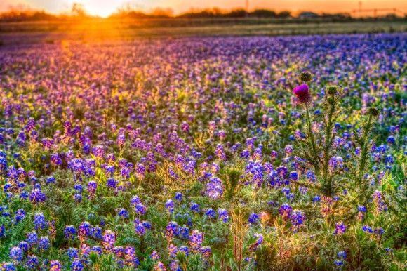 春が来た!花が咲いた!!世界各国27の花めぐり