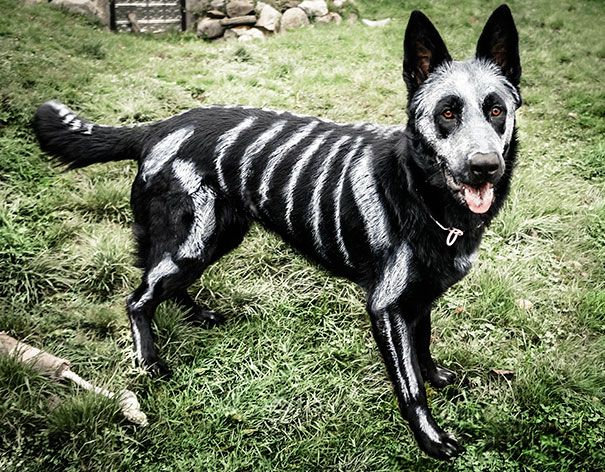 20+ Terrifyingly Pawsome Costumes for Your Dog