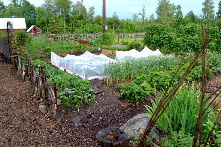 Skillnadens Trädgård, juni 2014.