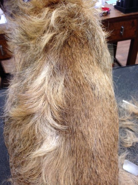 Counterconditioning Dog Grooming