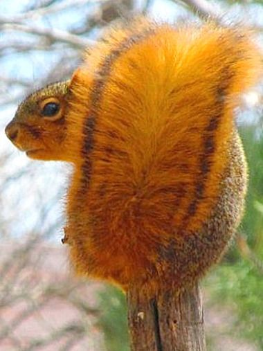(*Feelin' Squirrely group board*)