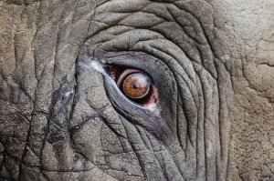 Usare gli elefanti è pericoloso E' noto che Annibale attraversò le Alpi con il suo esercito e, soprattutto, con un numero considerevole di elefanti. Tuttavia gli elefanti non sono questo portento bellico che si creda. Infatti tutti #elefanti #annibale #amilcare #cartagine