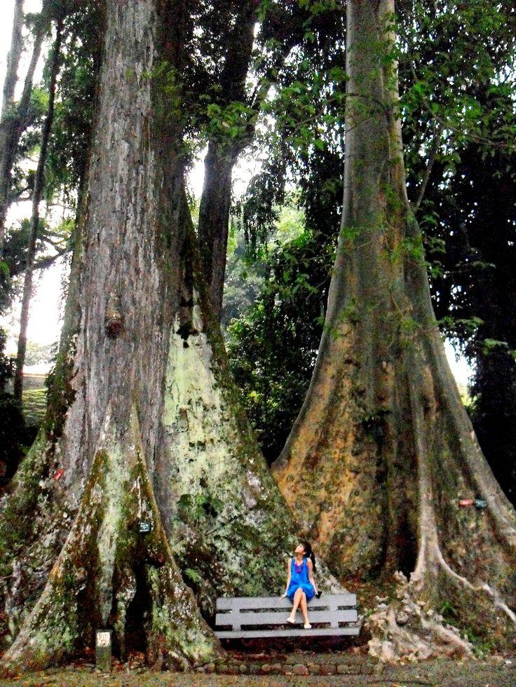 Kebun Raya Bogor, the Botanical Garden that located in the heart of Bogor, the small satellite city of Jakarta (Java Island, Indonesia).