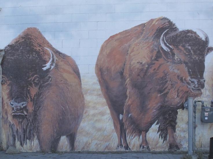 Buffalo mural ashcroft bc fauna pinterest for Bufflon revetement mural