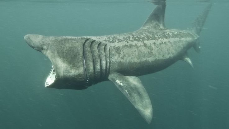 Nekton Fish Rare Sharks Spotted Do...