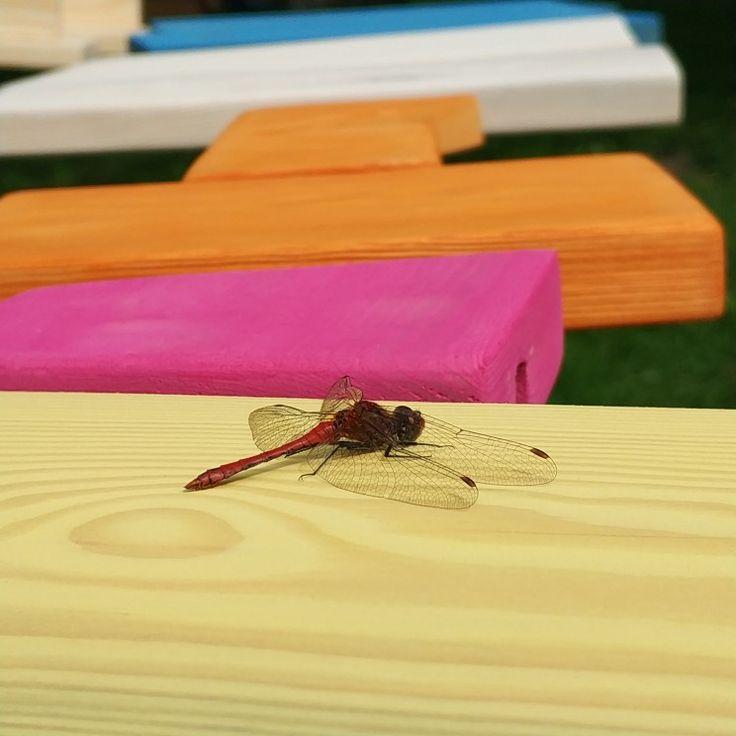 Nature love us:)  Handmade, Diy, nature colors, dragonfly :)  pinewood pine wood ring