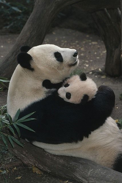So sweet...San Diego Zoo