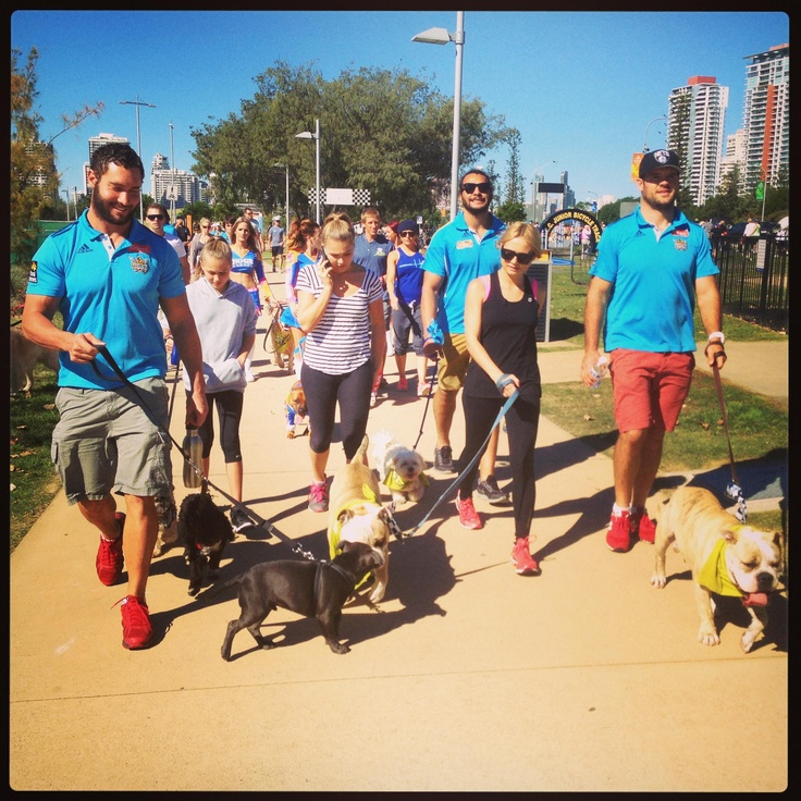 Thank you to the Gold Coast Titans who showed their support at the Million Paws Walk on Saturday! Gold Coast Walk #RSPCAMillionPawsWalk #millionpawswalk #rspcaqld #gctitans