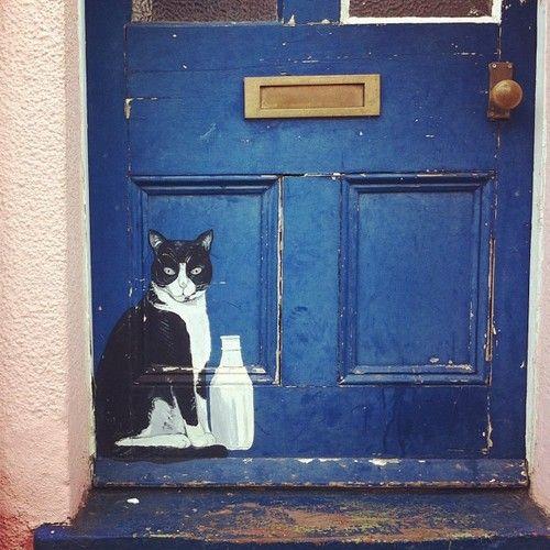 Blue door with cat and milk