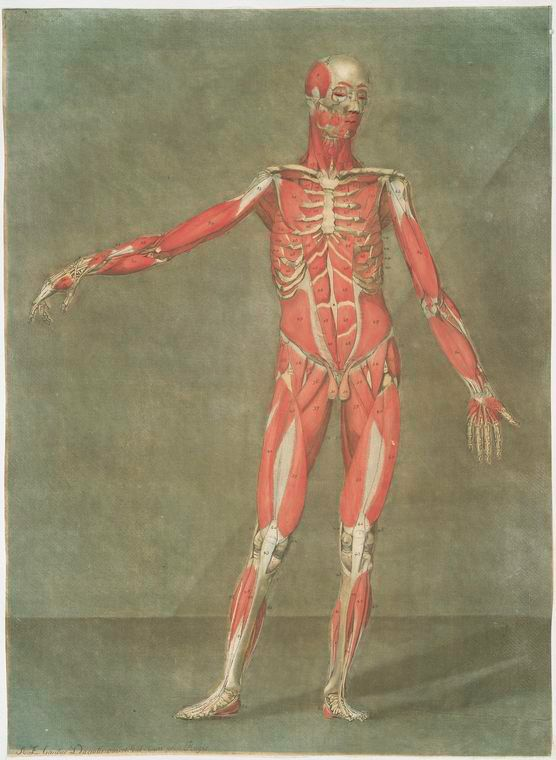 35 best ANATOMIA HUMANA ARTISTICA images on Pinterest | Anatomía ...