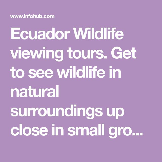 Ecuador Wildlife viewing tours. Get to see wildlife in natural surroundings up close in small group and expert guided tours.