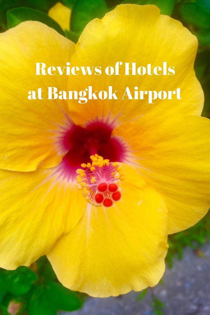 Reviews of hotels at Bangkok Airport - the Novotel and Best Western