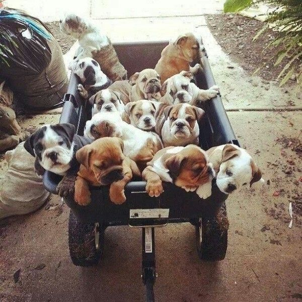40 Funny Pictures Of House Full Of Pets Cute Animals Bulldog