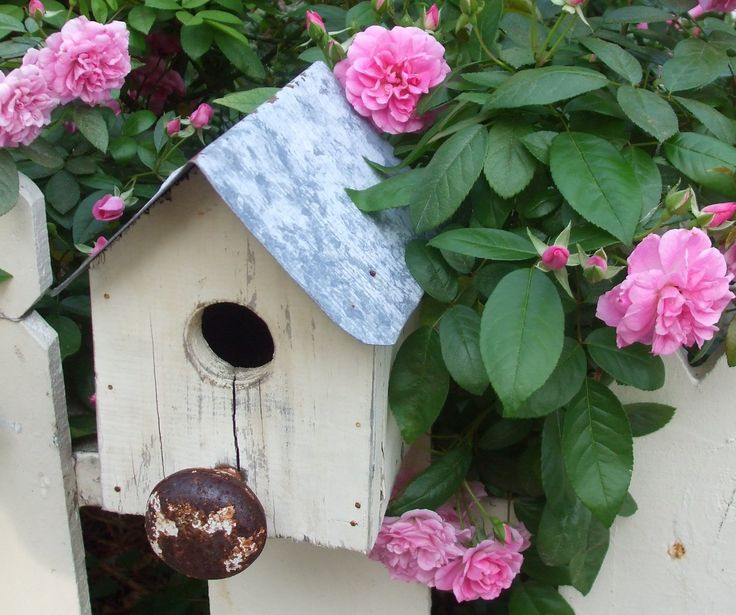 bird housesPink Flower, The Doors, Little Birds, Doors Knobs, Birds House, Doorknobs Birdhouses, Old Doors, Birdhouses Ideas, Grace Cottages
