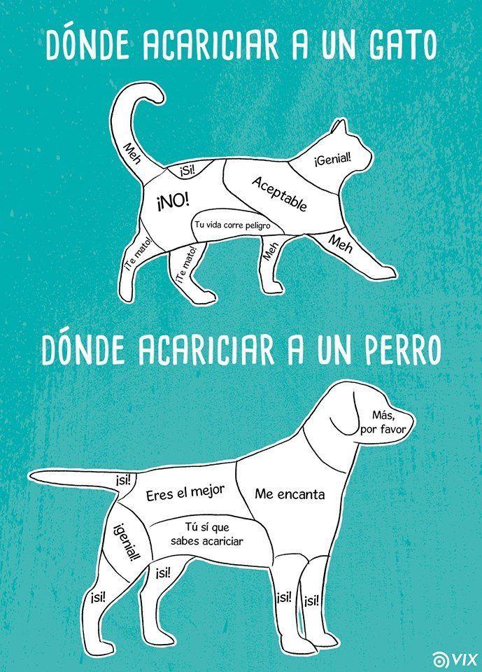 Pin De Cami En Spanish Memes General Perros Mascotas Perros Perros Y Gatos Tiernos