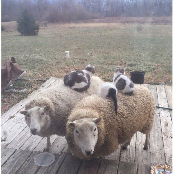 Excuse me...I think we have something that belongs to ewe.
