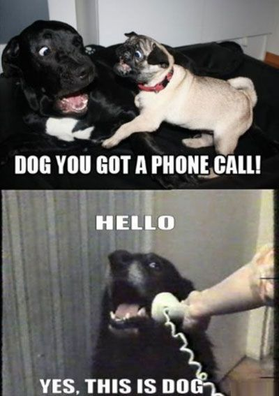 This is totally what Bentley and his buddy Spike would do. Hahaha