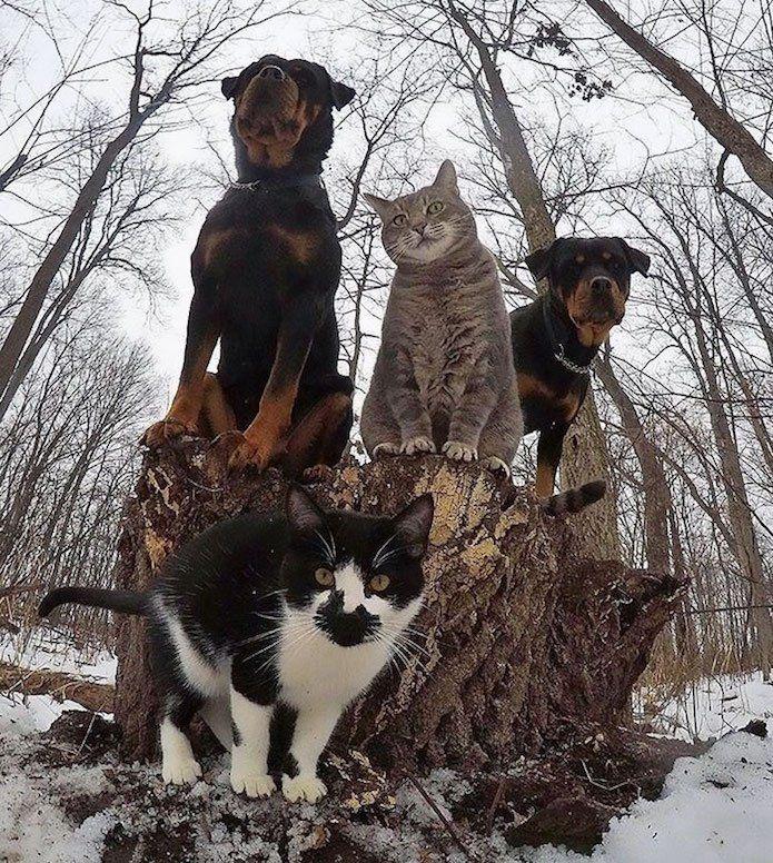 Quand les animaux prennent la pose... De vraies stars du rock !