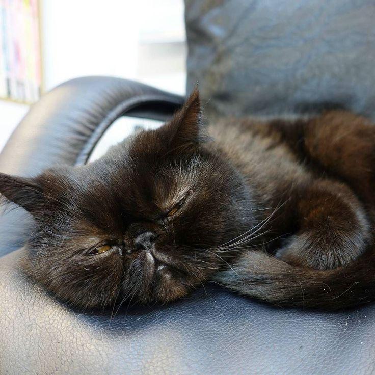 go away..... I'm not ready for serve.  #catlover #cny #catstagram #cats #kitty #ilovemycat #neko #gato #love #猫 #catoftheday #petstagram #pets #ねこ #ねこ部 #ネコ #crazycatlady #ilovecats #catsagram #kitten #instacat #instagramcats #cutecat #adorable #petsofinstagram #animals #animallover #pikapika_nails #mycat #catlove