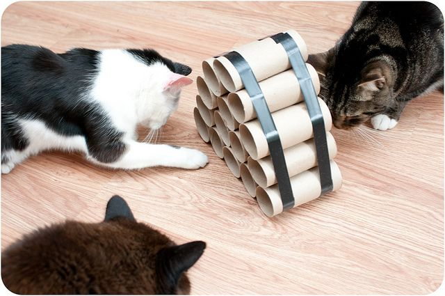 Crafty Cat Toys   Just put treats in each tube and keep kitties entertained for awhile! And the best features is: It's FREE!