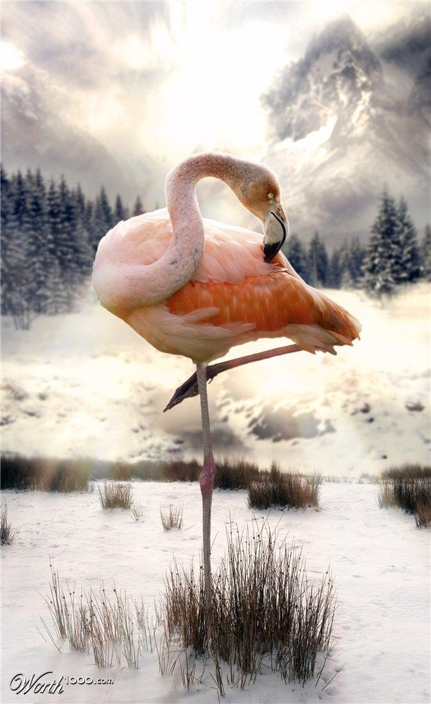 This reminds me of a ballerina. I Wonder if here has ever been a broadway show with Ballerina's dressed as Flamingo's ?