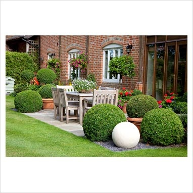 Shaped boxwoods. Ligustrum topiary tree.  Like the table & chairs too.