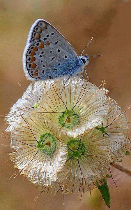 Papillon et jolies fleurs <3 ****