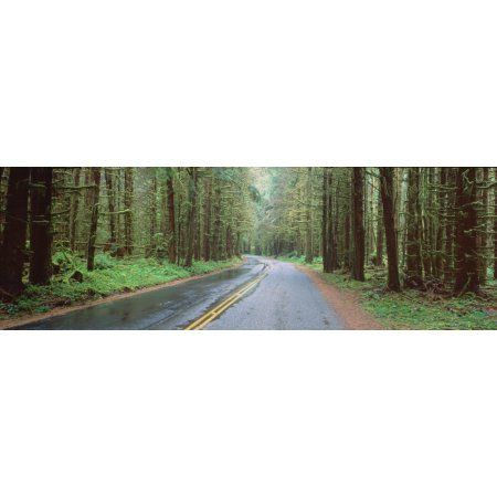 Bad Weather Road Hoh Rain Forest Olympic National Park Washington State Canvas Art - Panoramic Images (36 x 12)