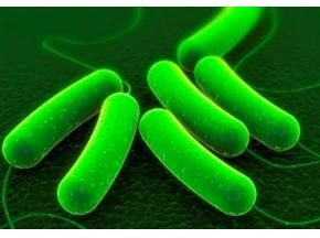 Global Viral Vectors and Plasmid DNA Manufacturing Market Research Report 2017