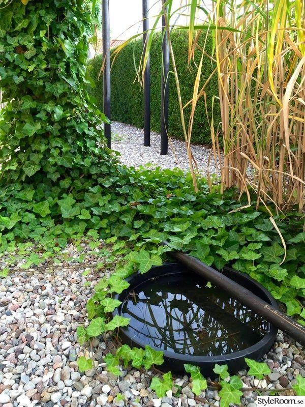 elefantgräs,fågelbad,murgröna