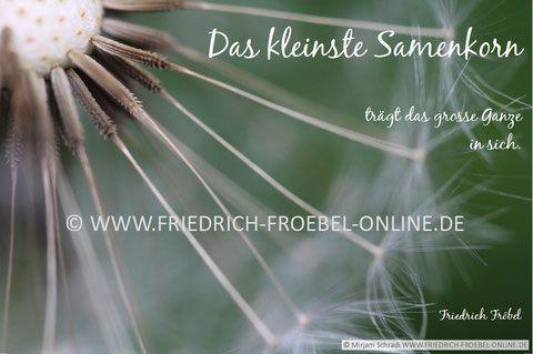 POSTER mit pädagogischem Spruch von Friedrich Fröbel (Kindergarten-Begründer): Das kleinste Samenkorn trägt das große Ganze in sich.... Motiv: Pusteblume - Löwenzahn