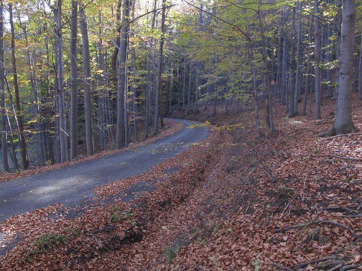 Forest path by Tomáš Junga on 500px