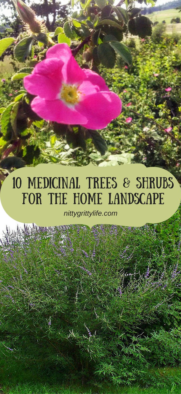 best 25 trees and shrubs ideas on pinterest yellow shrubs best