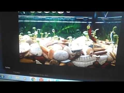 Семена аквариумных растений