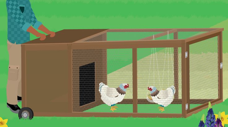 Do your backyard chickens need a new home? Why not try a chicken tractor –  the mobile home for chickens! Check out our easy-to-use DIY guide!