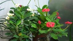 grön växt med röda blommor