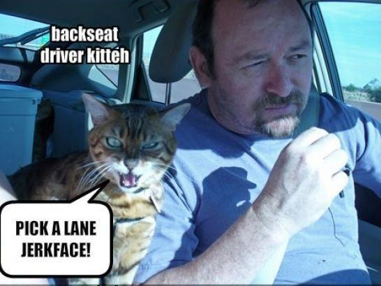 Funny Pictures With Captions Clean With Animals 70 best funny c...