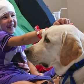 Al via la Pet Therapy nelle case di cura ed ospedali lombardi I cani ed altri animali oltre ad essere compagni di vita che riempiono le nostre giornate, sono sempre più spesso utilizzati come supporto ai malati. La scienza ha ampiamente dimostrato il valore del #cane #cani #pettherapy