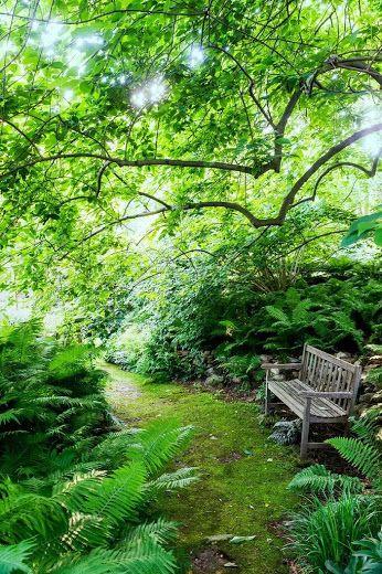 Zen areas in the trees