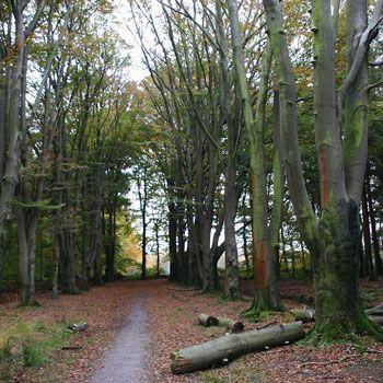 Wandelroute Mensinge Kop van Drenthe 7 km