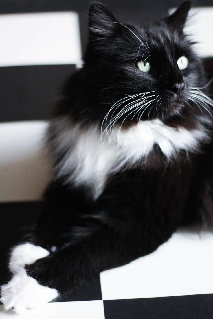 The carpet camouflage Cityscape Bliss // Naughty Felines, black and white tuxedo cat kitten, pet camouflage