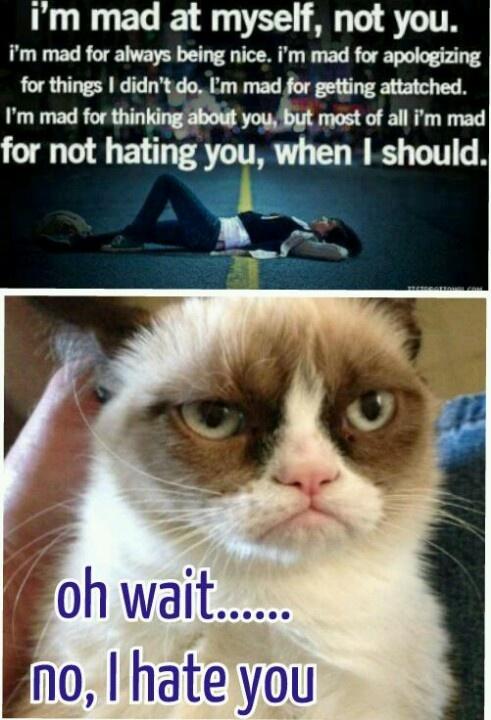 126 best grumpy cat images on pinterest