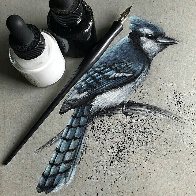 beautiful bird drawing http://webneel.com/bird-drawings | Design Inspiration http://webneel.com | Follow us www.pinterest.com/webneel