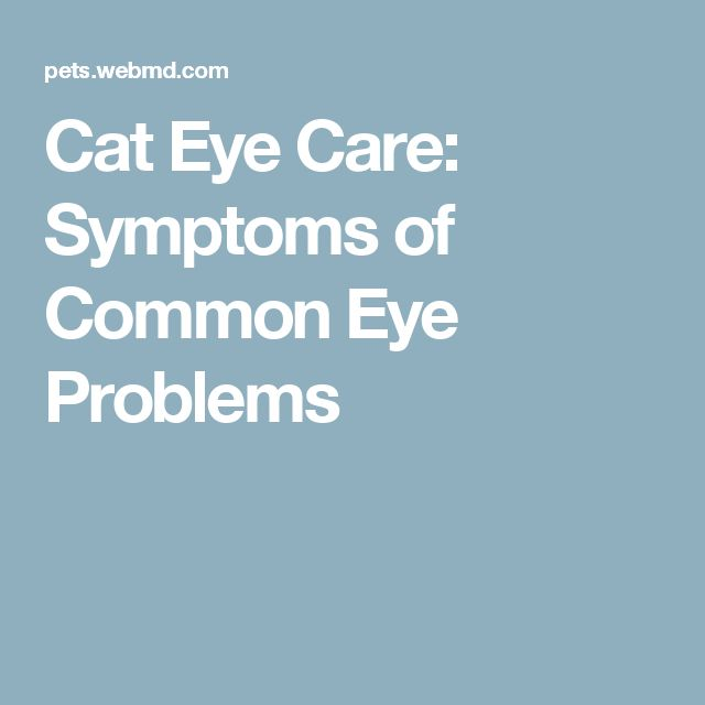 Cat Eye Care: Symptoms of Common Eye Problems