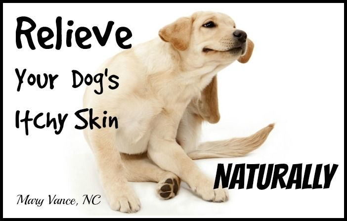 Top 10 Home Remedies to Treat Itchy Skin in Dogs   Fab How