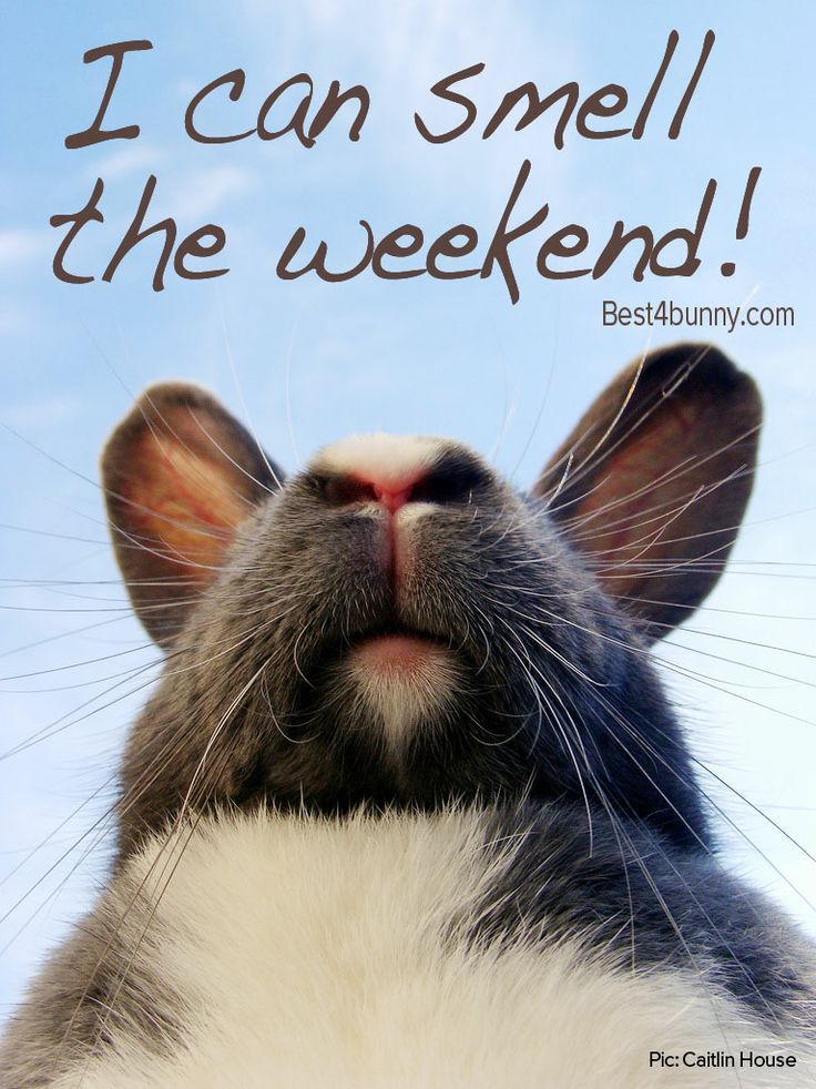 We can smell the weekend!!! Can anyone else?? Best4bunny #Best4Bunny